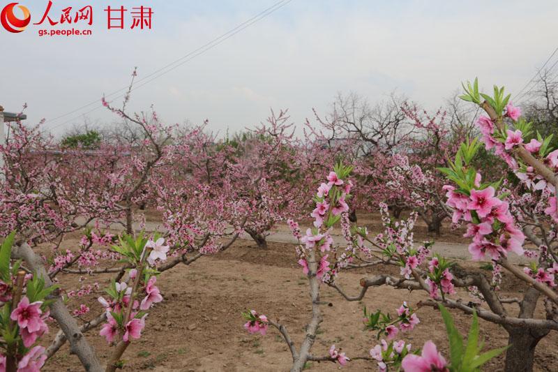 第三十一届中国·兰州桃花旅游节二十日开幕【3】
