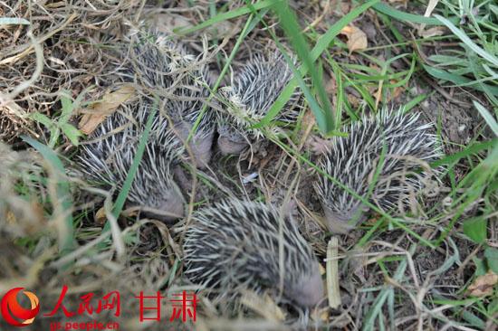 麦积森林公安放生野生动物【4】