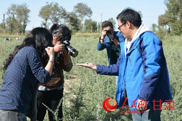 瓜州县岷县村:一个戈壁滩上的移民村致富谱写联想p1视频图片