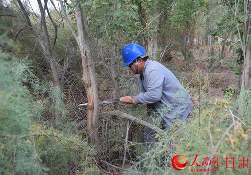 国网金塔县供电公司:清理树障