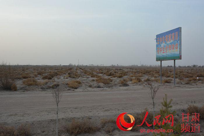 民勤稳步建设万亩胡杨生态风景林区