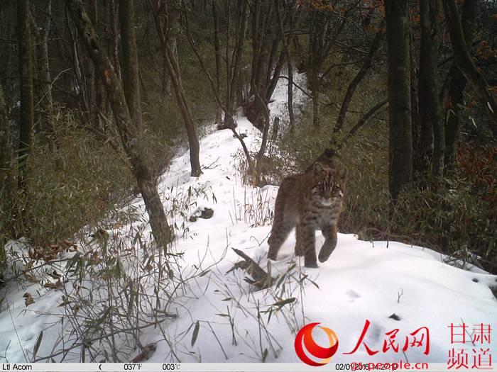猫等40余种珍稀野生动物