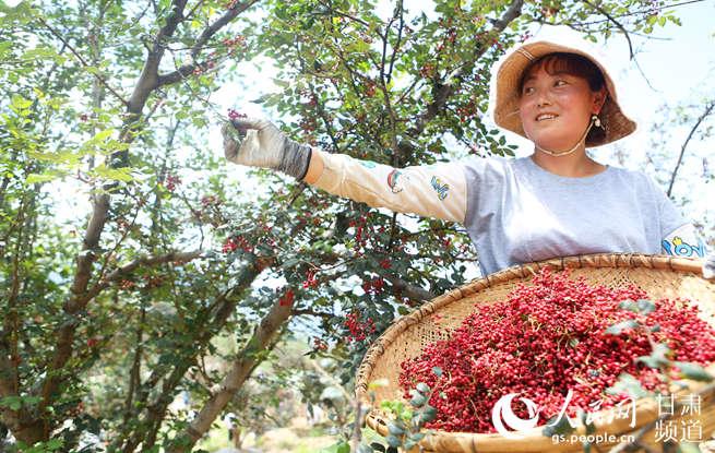 甘肃武都:秦巴山区花椒红 产业发展助农富