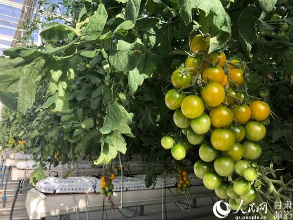酒泉:党组织建在产业链 戈壁滩上果蔬香