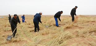 """38年坚守:六老汉,三代人,沙漠变绿洲        38年,八步沙""""六老汉""""三代人接续加入治沙行列,在寸草不生的沙漠建成了防风固沙绿色长廊。"""