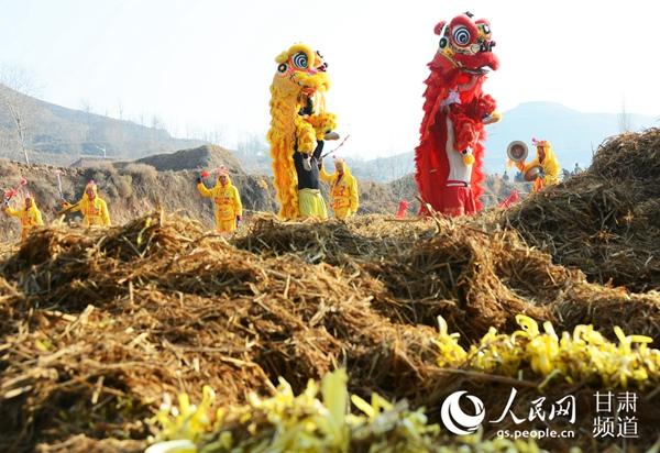 甘肃兰州:开镰割韭黄农户迎丰收
