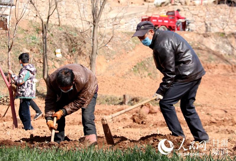 成县农民在田间地头劳作。(张茜 摄)