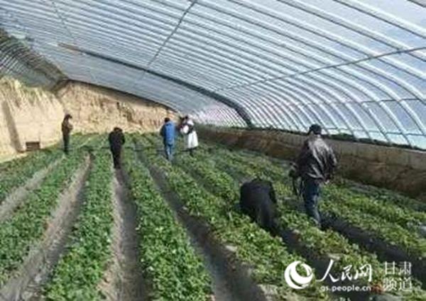 蘭州七裡河區魏嶺鄉全面恢復農業生產