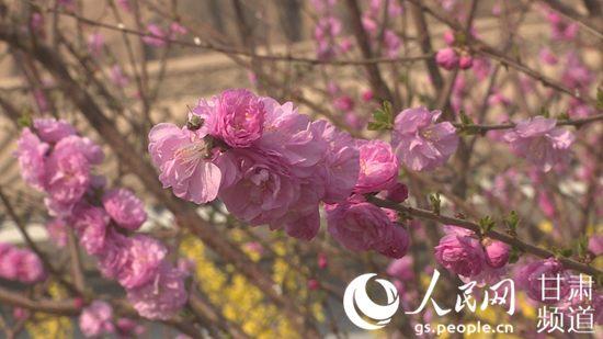 黄河石林大景区内盛开的花。(景泰县委宣传部供图)