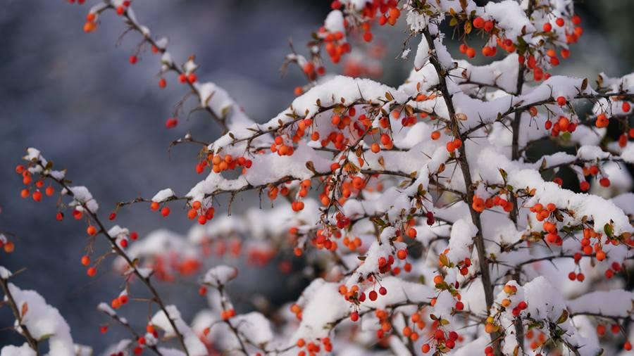 甘肃肃南秋雪美景宛若童话。武雪峰、安维斌摄