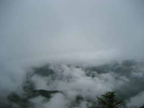 舟曲武坪牙下森林风景