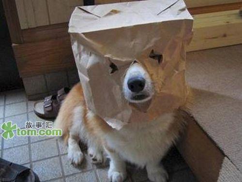 宠物狗的搞笑装