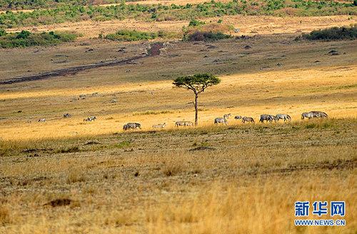 风景 田园 大自然动物